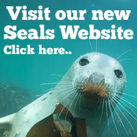 Seal Diving the Farne Islands